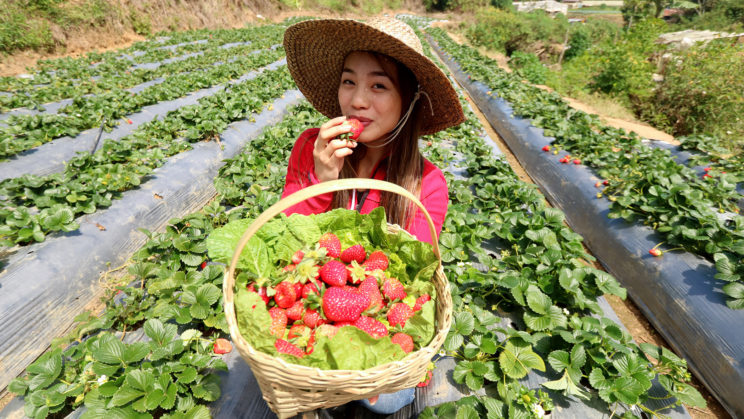 Baguio Leads To Agri Tourism Mulls Opening Of First