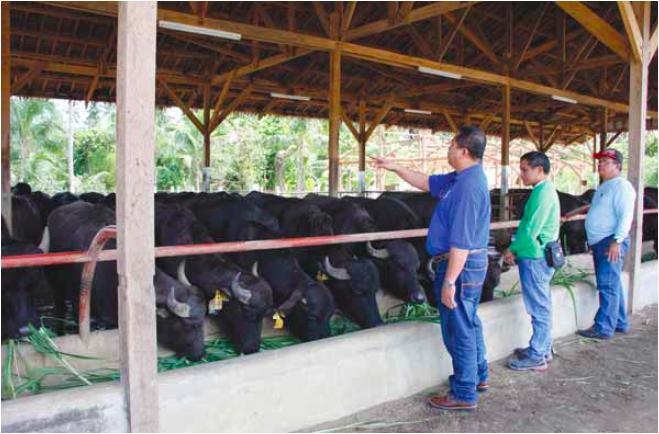 buffalo dairy farm project report pdf